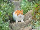 The Cat of Rhodos