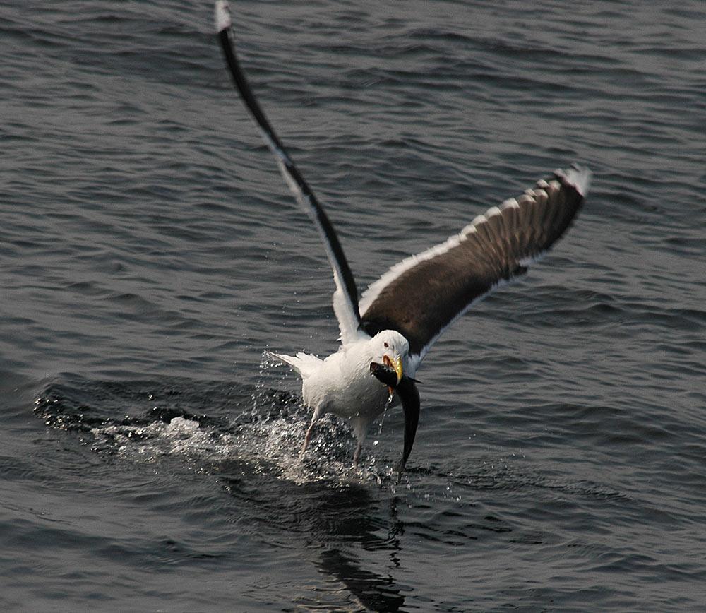 The catch!