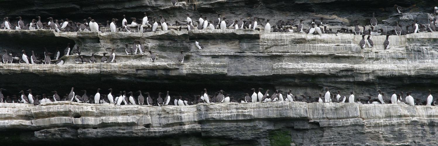 The Cliffs of Moher - im Westküste Irlands - West-Ireland