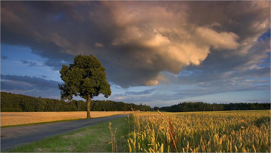 [ the cloud ]