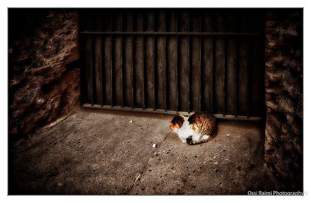 The Colloseum Cat, Rome 2009