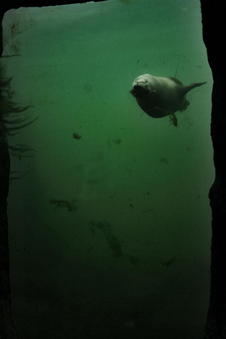 The Common Seal III
