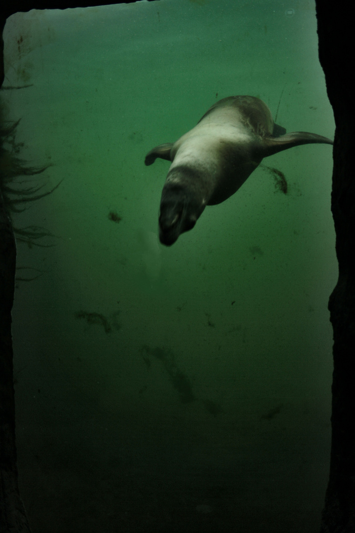 The Common Seal IV