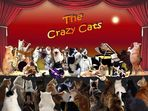 The Crazy Cats