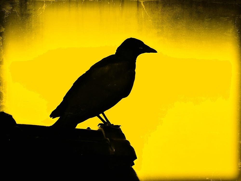 The Crow ...