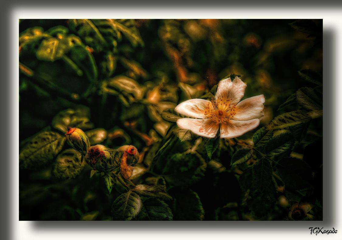 The Dark Flower ( la flor oscura)