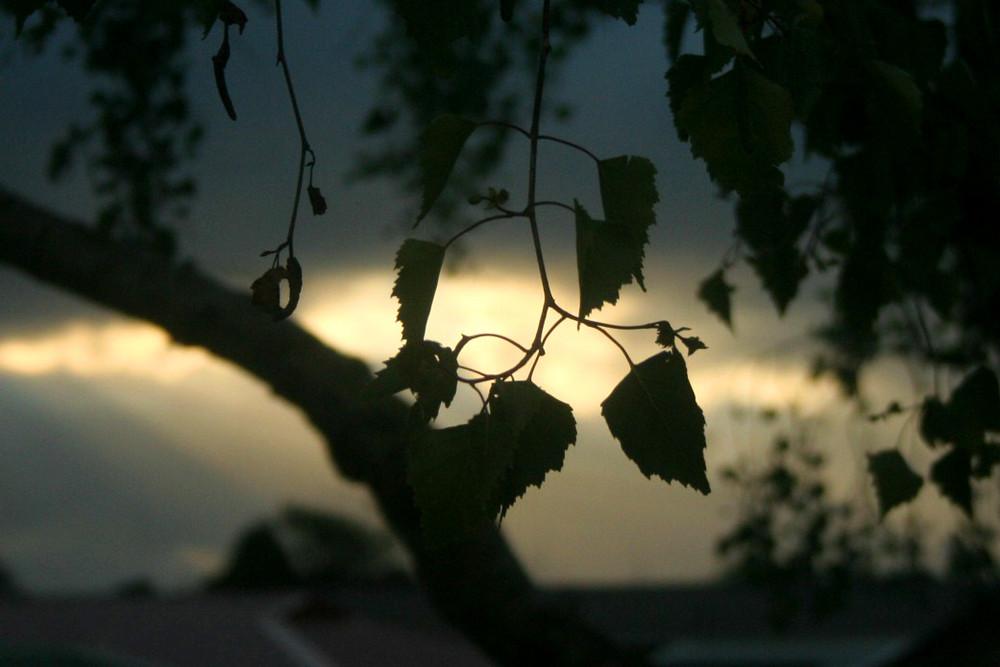 the dark leaves