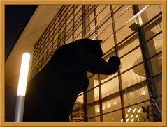 The Denver Bear!