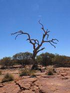 The Deserted Tree