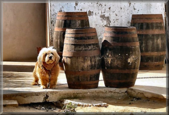The dog that likes wine :-))))