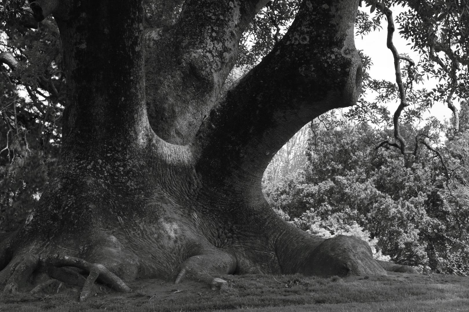 the Elephant Tree*