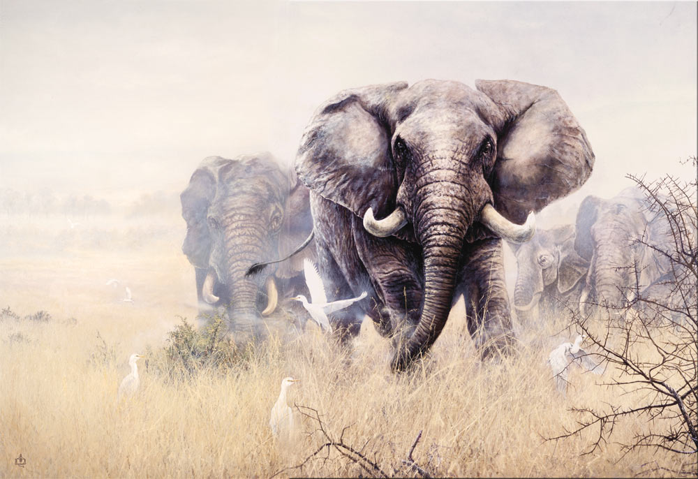 The Elephants of Africa (Kenya)