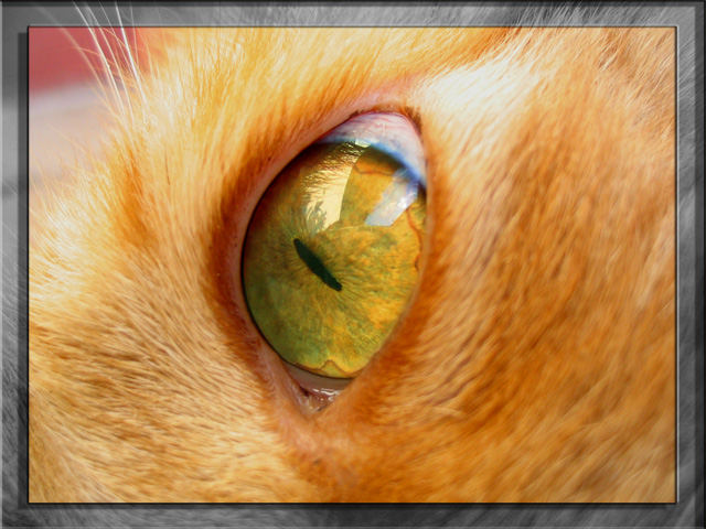 The Eye of a Tiger