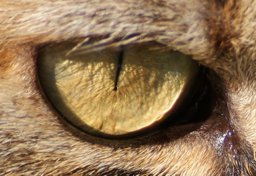 the eye of .......................