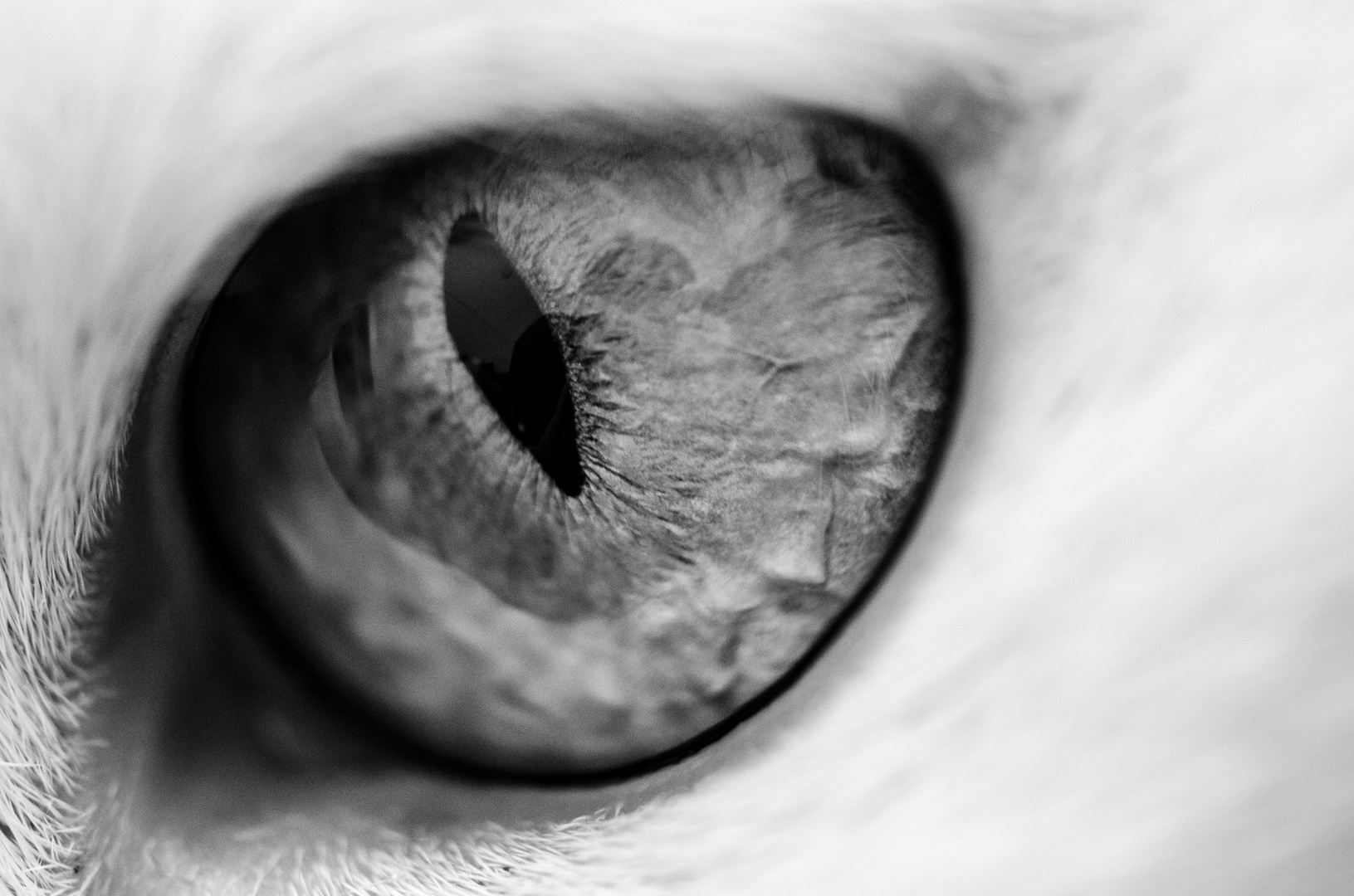 """The eye of the """"mini-tiger"""""""