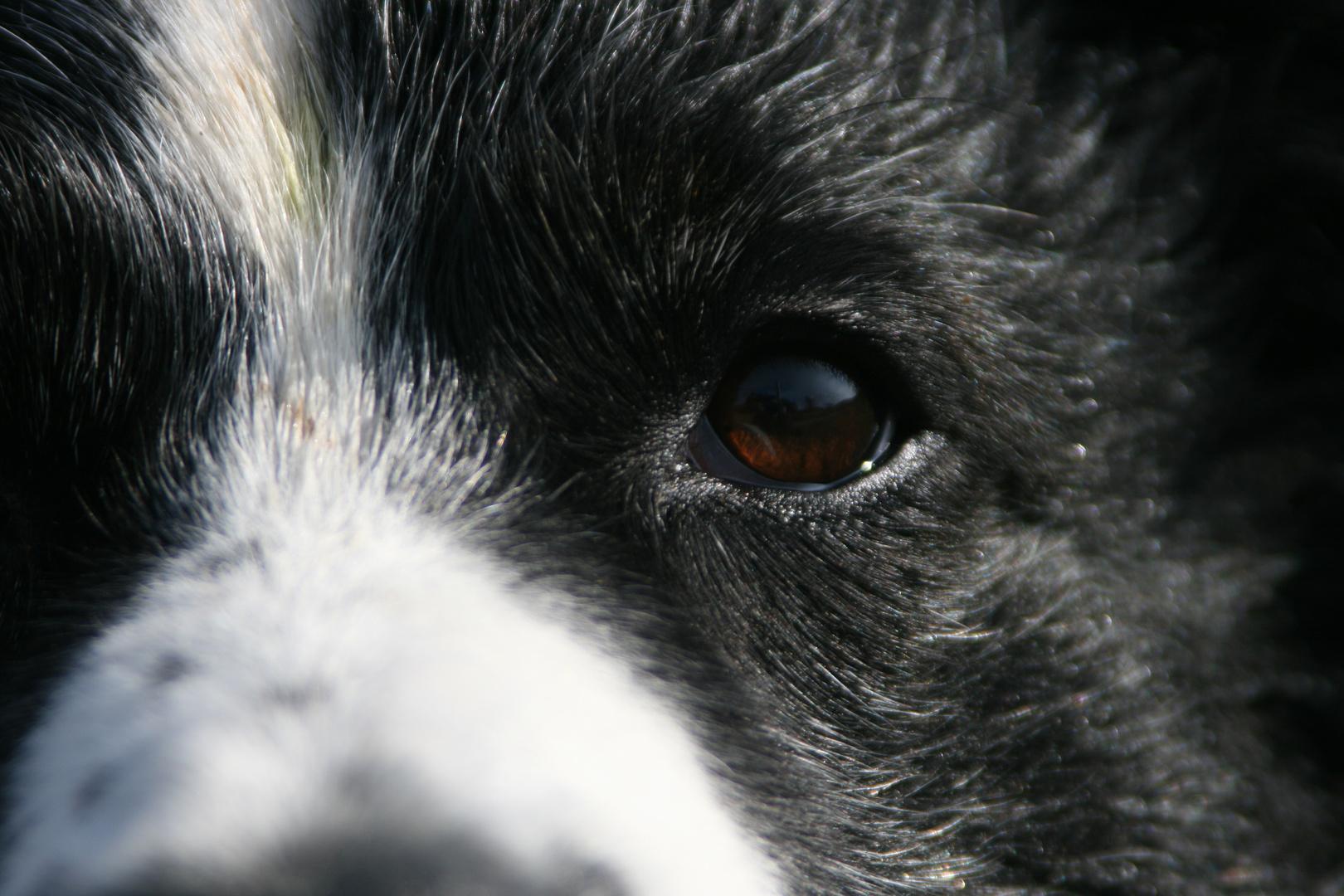 The eye of the Ti... äh dog :P