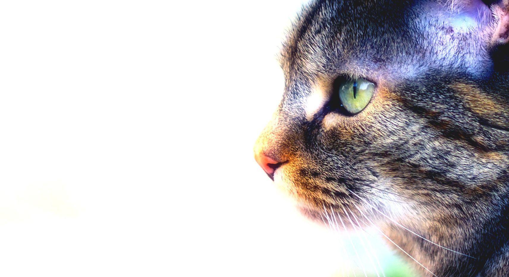 The eye of the tiger .... hömm