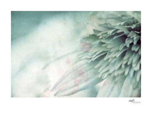 .the flower.