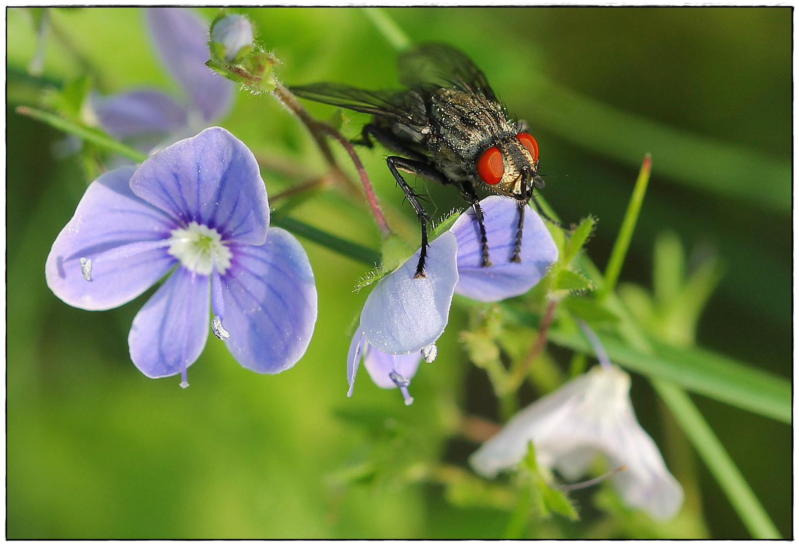 The Fly and the Flower