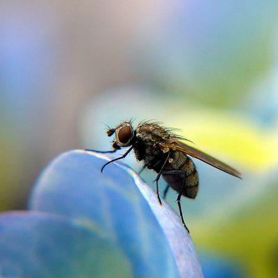 the Fly III