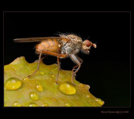 The fly only:o)