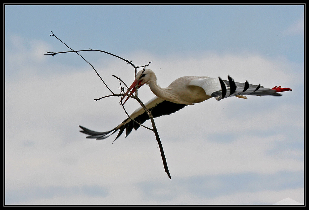 The flying Net