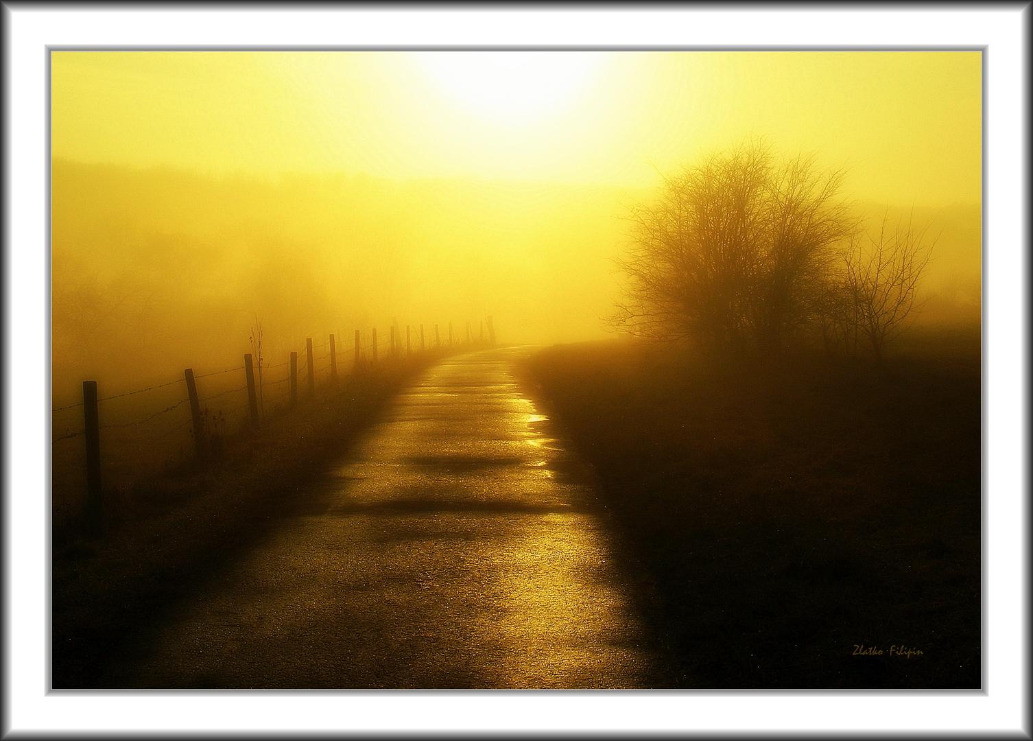 *** The Fog - 11 ***