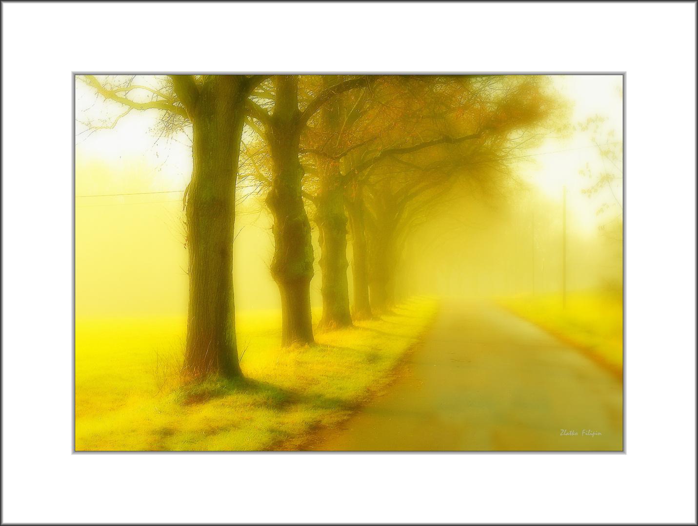 *** The Fog - 14 ***
