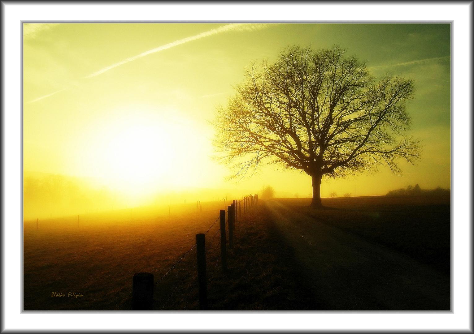 *** The Fog - 3 ***