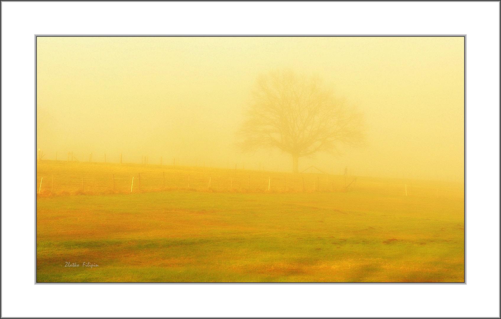 *** The Fog - 8 ***