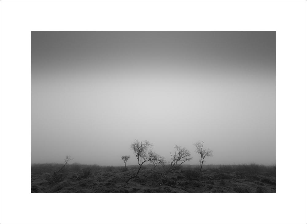[ ... the fog ]
