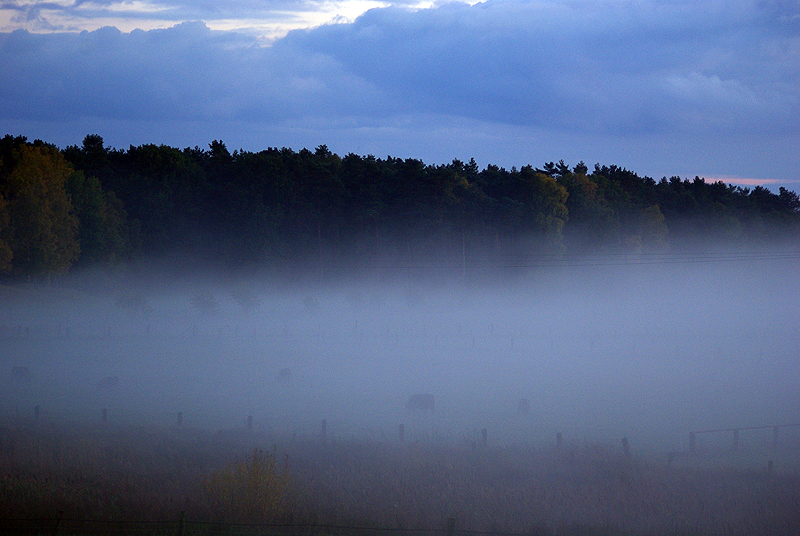 *The fog* Part I