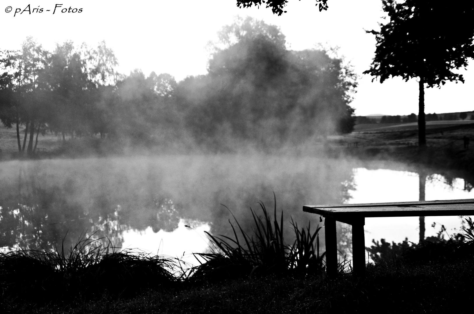 The fogg