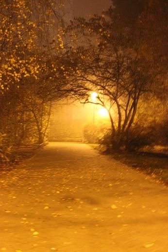 the foggy night