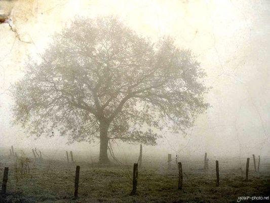 the foggy tree
