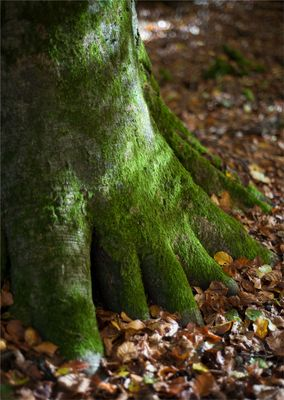 the foot of the forest monster.....