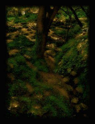the Gardens of Lothlorien....