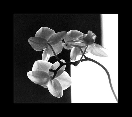 The Geometry of an Orchid