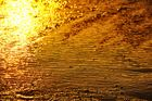 the golden light