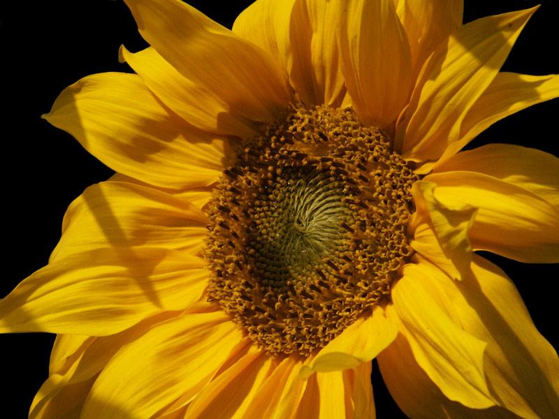 the golden sun......