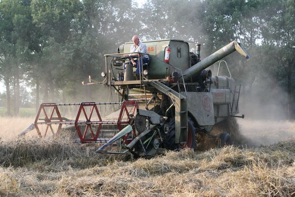 the grain harvest with a claas matador.