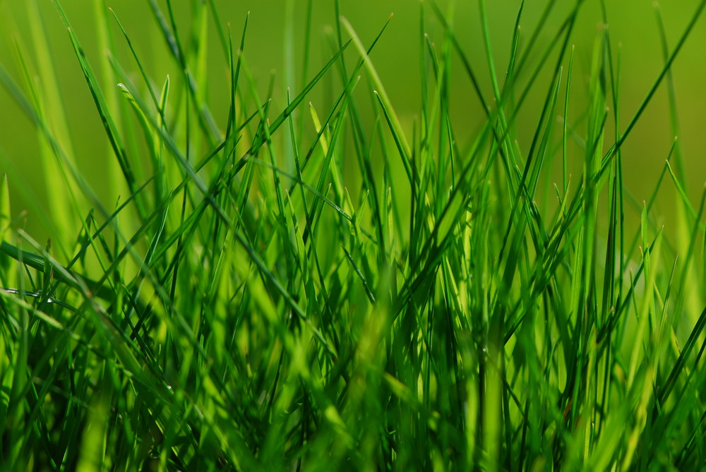 The gras is green
