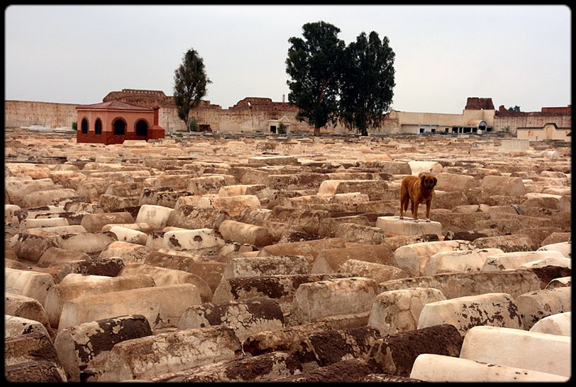 The guardian of the Jewish Cementary in Marrakech