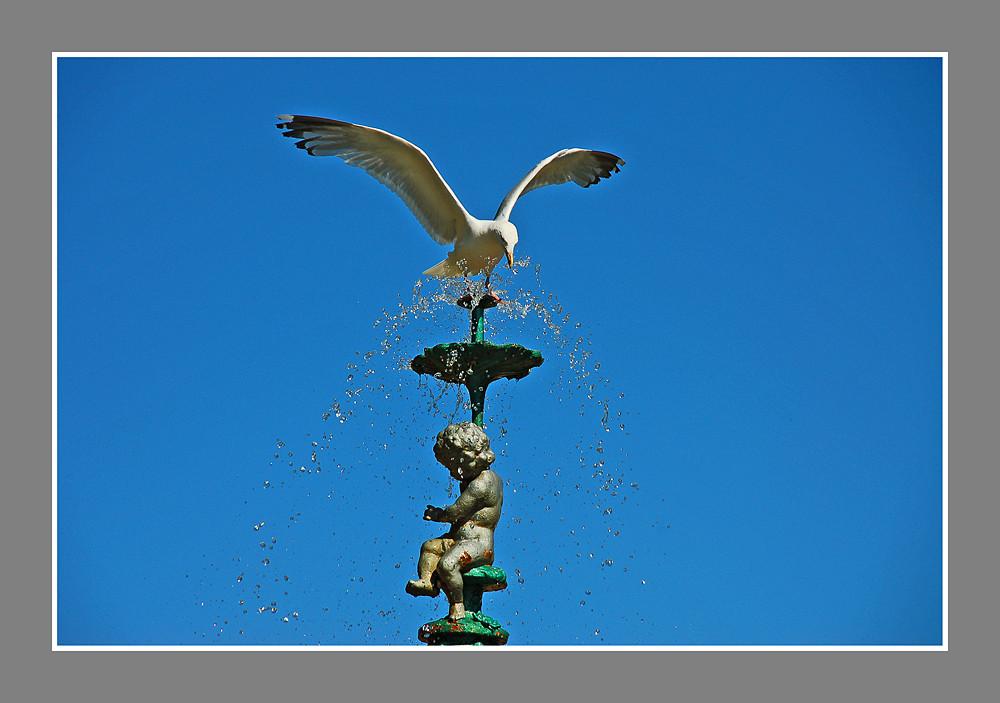 the gull's fountain