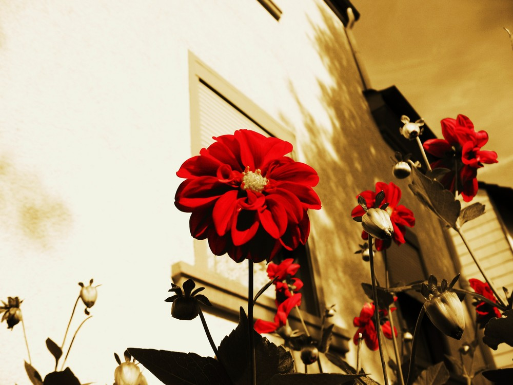the happy flower