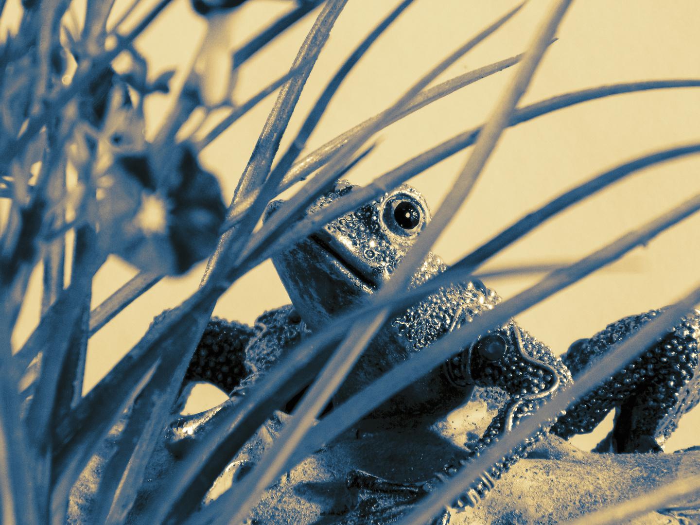 The Hidden Frog