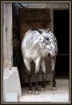 """""""The horse."""""""