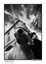 :::: THE HORSE ::::