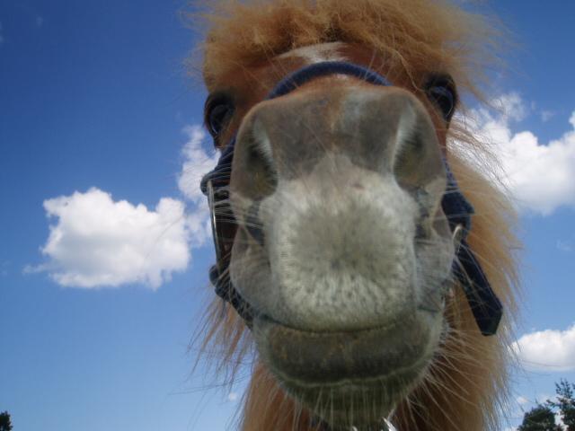 """The horse """"mumin"""""""