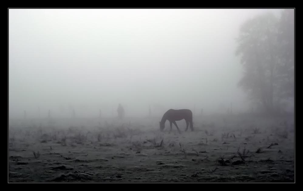 """"""" The Horse Whisperer """""""